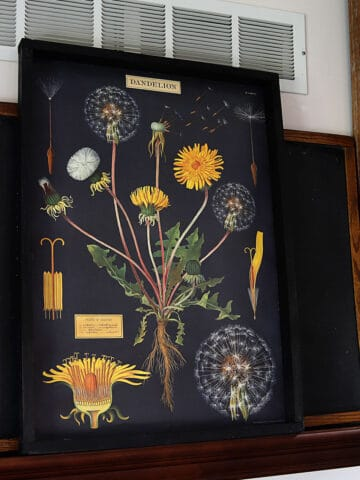 diy wood poster frame with dandelion print from Cavallini & Co.