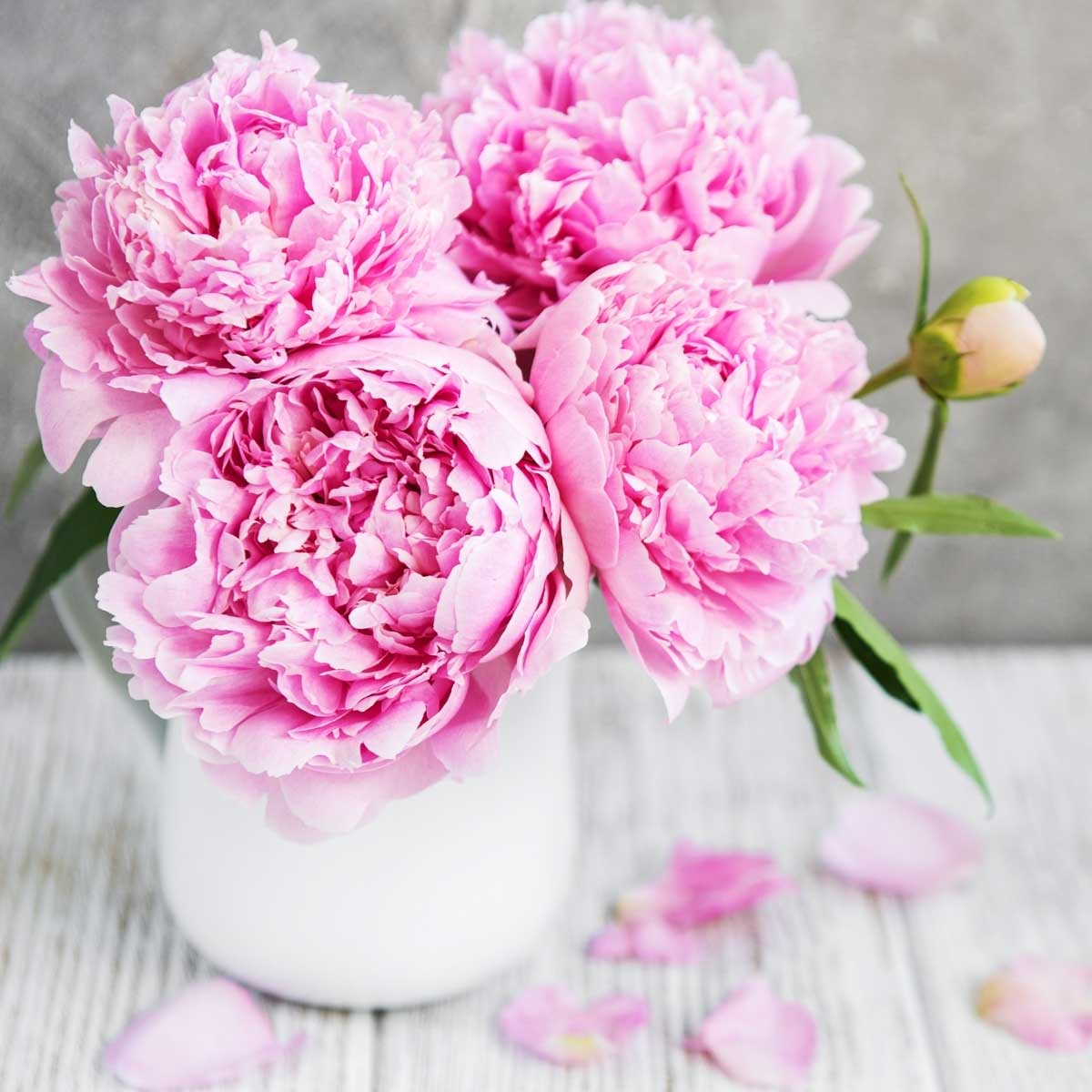 Pink peonies in a vase on a white wooden table