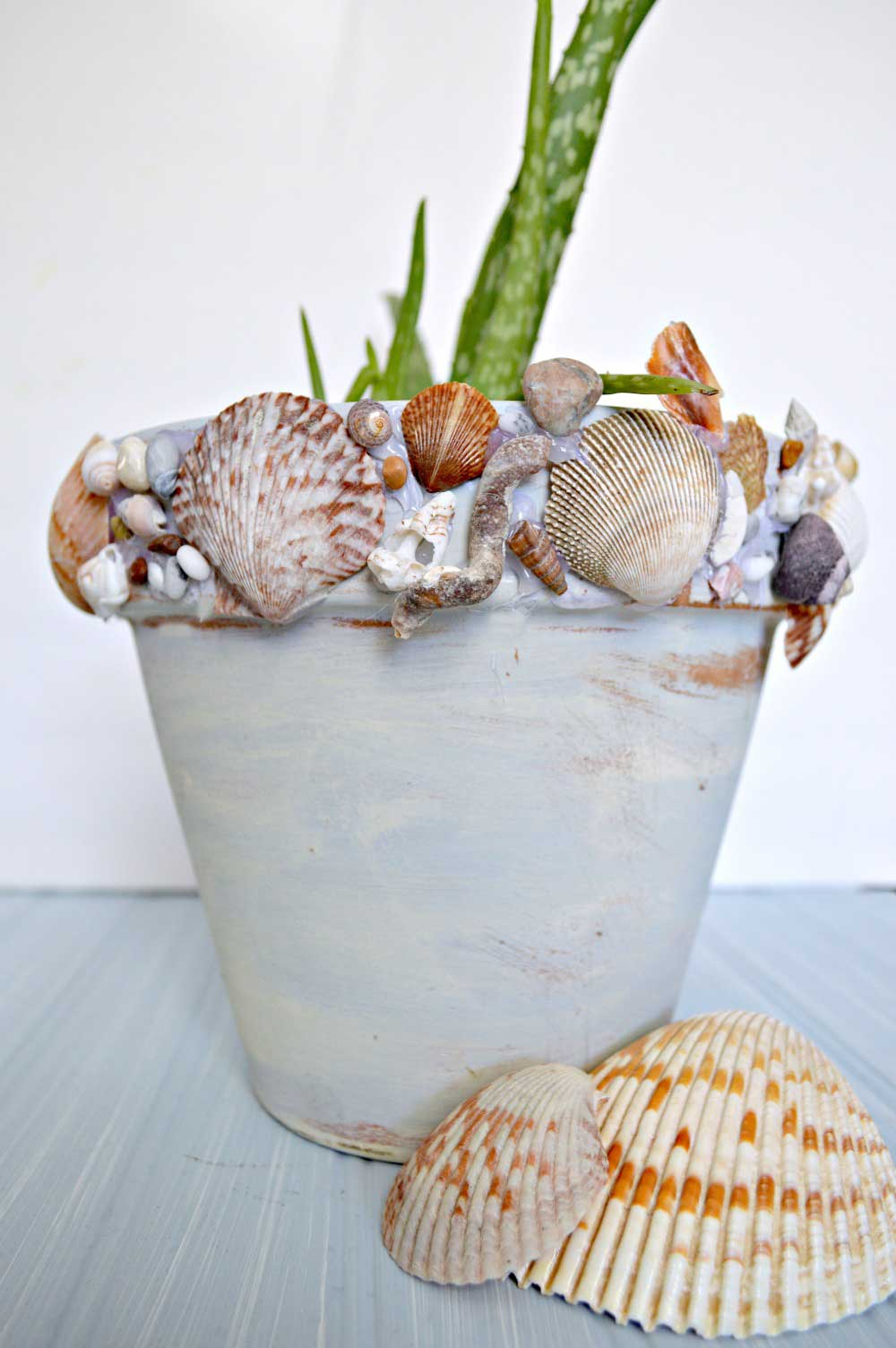 Flower pot covered in sea shells.