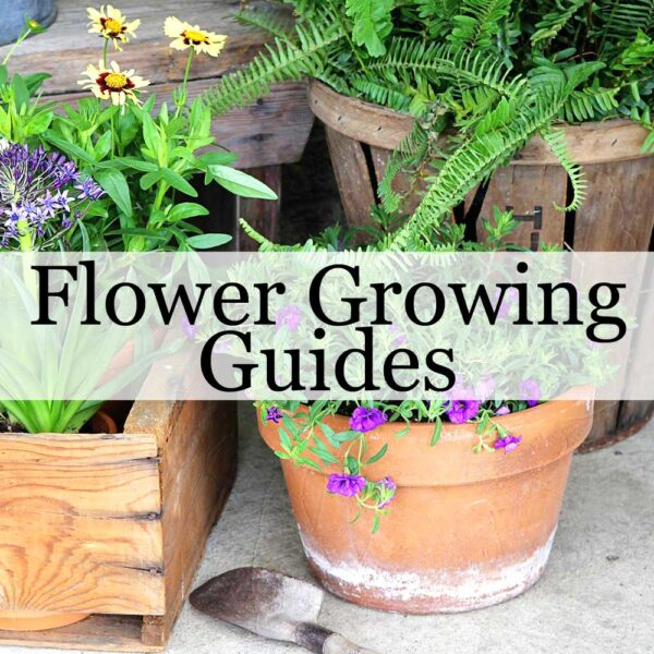 Flower Growing Guides