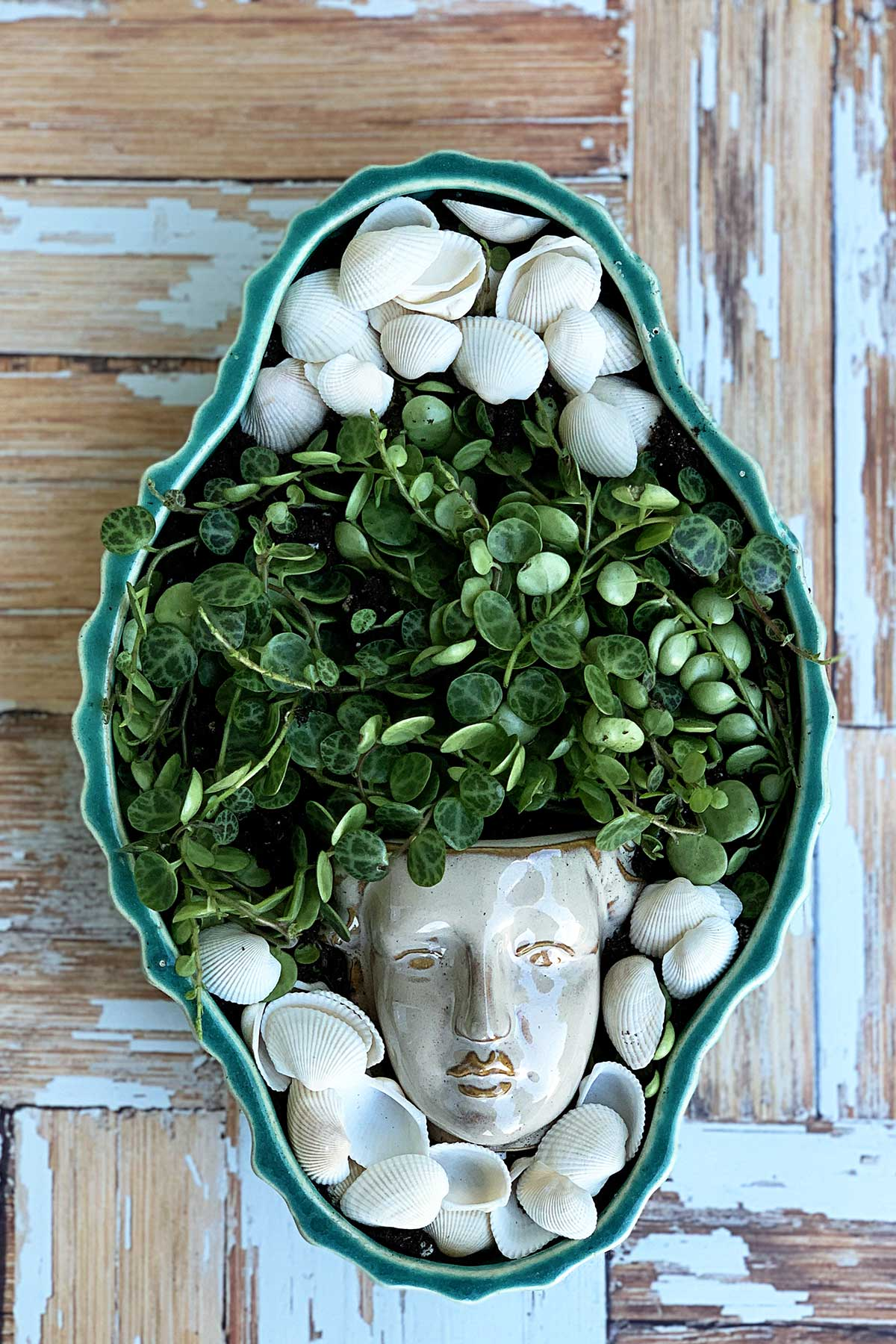 Shallow planted holding succulents coming out of a small head shaped planter.