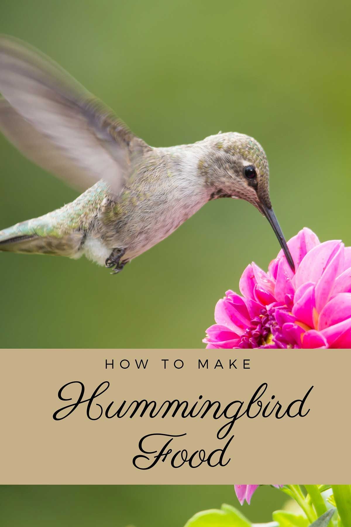 Hummingbird in flight feeding off flowers.