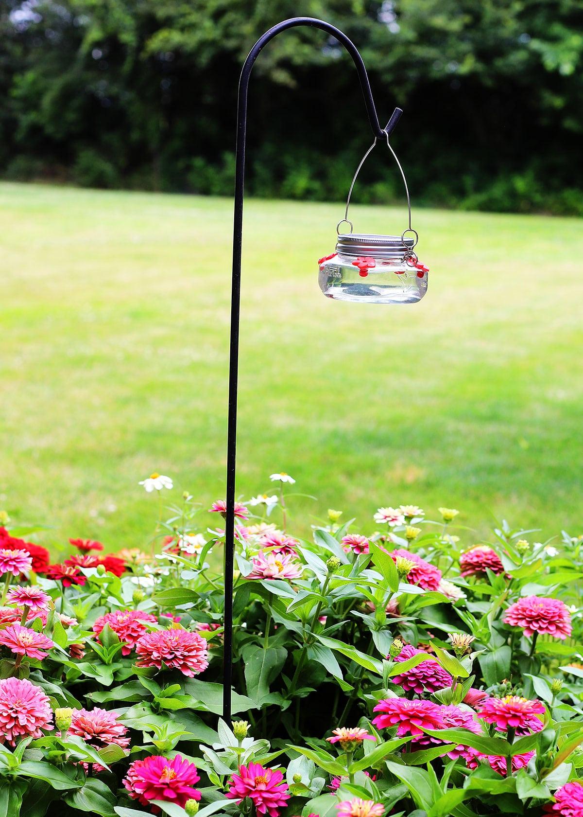 Hummingbird feeder in backyard surrounded by zinnia flowers.