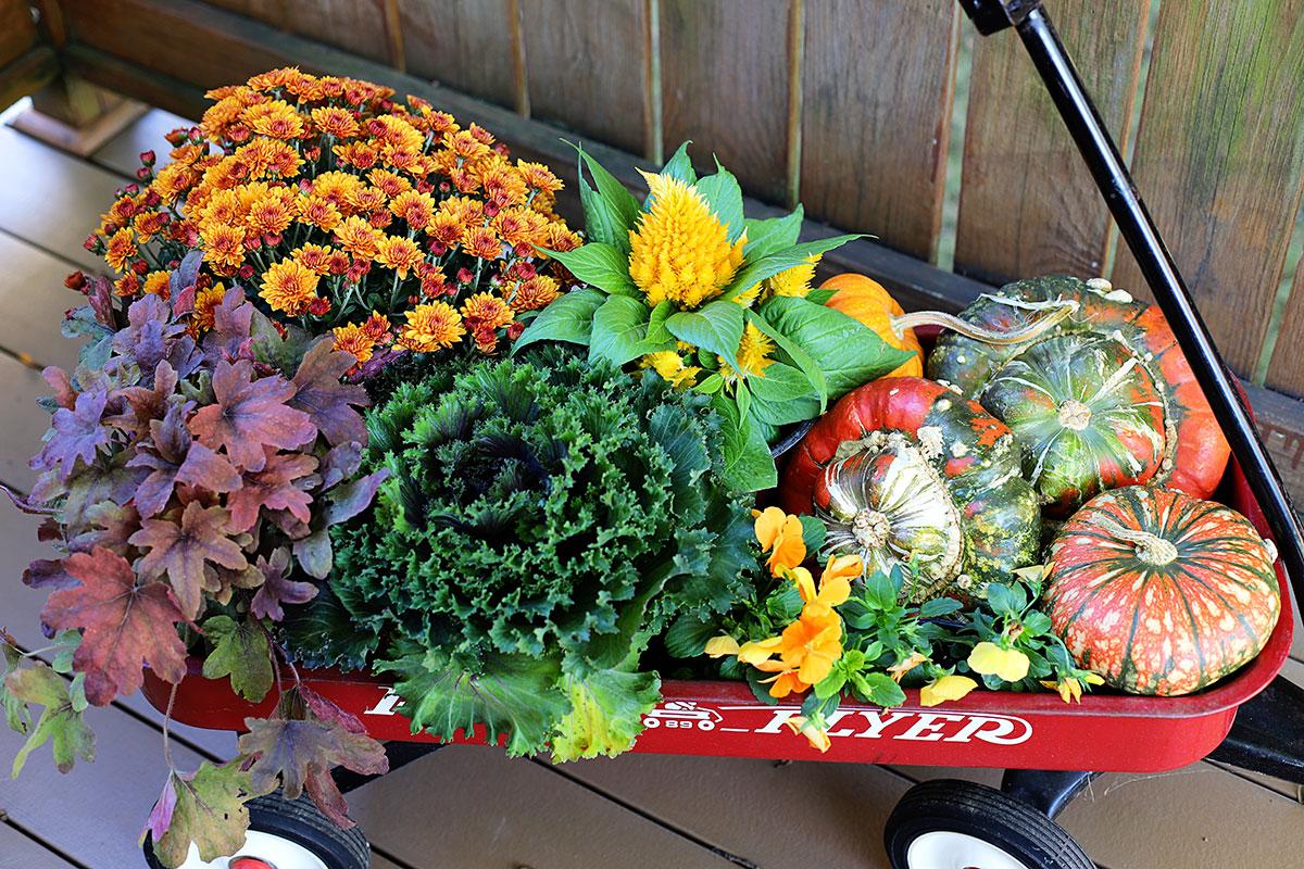 Fall garden plants to fill an urn.