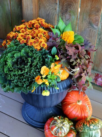 Fall porch pot using traditional fall colors.
