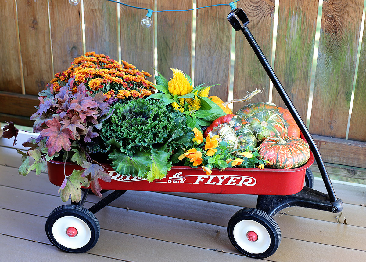 Various fall flowers setting in a Radio Flyer red wagon.