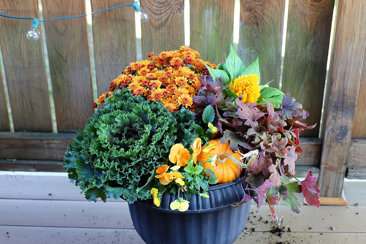 Using a small pumpkin in a fall container.